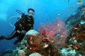 Raja Ampat dan TN Komodo Masuk Destinasi Snorkeling Terbaik di Dunia