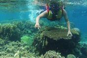 Repot 'Packing' Peralatan Snorkeling? Ini Tipsnya...