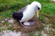 Burung Ini Fenomenal, Bertelur pada Umur 66 Tahun