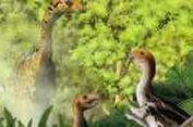 Dinosaurus Unik Justru Jadi Ompong Setelah Dewasa