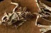 Ternyata Dinosaurus Punah Lantaran Lama Menetas