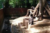 Kasus Beruang Madu, Menteri LHK Diminta Reformasi Kebun Binatang