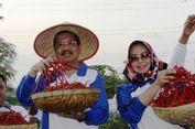 Tekan Inflasi, Sumatera Utara Galakkan Penanaman Cabai