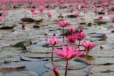 Cantiknya Danau Padma di Thailand