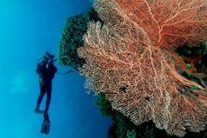 Keindahan Wakatobi Memukau Wisatawan