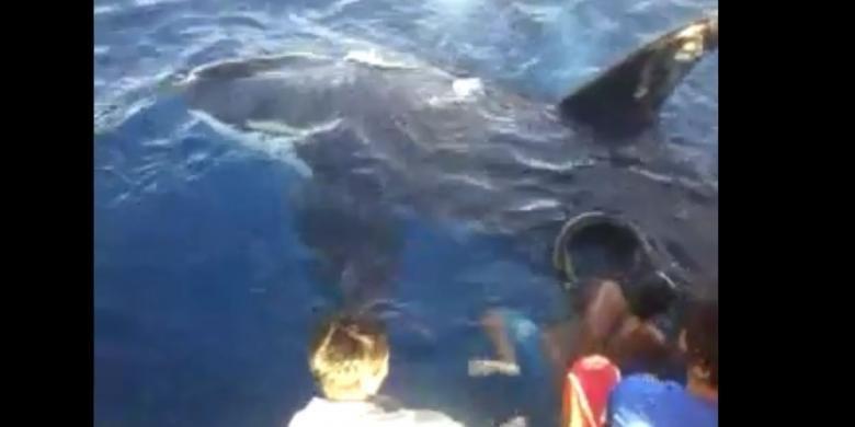 Ini Alasan Nelayan Selamatkan Orca dan Buang 2 Ton Ikan Tangkapannya