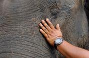 Pemilik Tewas Diserang Gajah Peliharaan, Jasa Wisata Masih Beroperasi