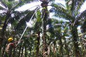 Kencana Agri Ltd Anggarkan Rp 75 Miliar Bangun Pabrik Pengolahan CPO di Sulteng