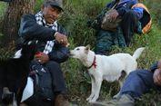Kisah Jono dan Joni, Dua Anjing Pemandu Pendaki di Gunung Agung