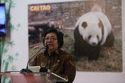 Menteri Siti: Memangnya Bisa 40 Juta Hektare Lahan Selesai dalam 5 Tahun?