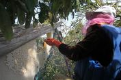 Panen Madu Hutan di Kapuas Hulu, Kearifan Lokal Menyesuaikan Zaman