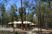 Liburan Keluarga di Paradise Country, Glamping hingga Gendong Koala