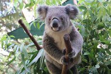 Ini Aktivitas Menyenangkan di Kebun Binatang Australia