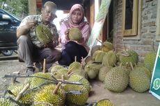 Nikmatnya Durian Kendal di Pinggir Hutan Jalan Raya Kaliwungu-Boja