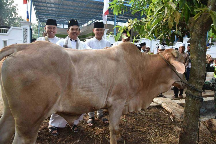 Kegiatan Bupati Purwakarta melakukan penyembelihan hewan qurban di perkampungan terpencil wilayah Kabupaten Purwakarta.