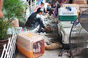 Bikin 30 Anjing Mati di Dalam Mobil, Pria Ini Bisa Dipenjara 90 Tahun