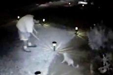 Terbukti Bunuh 21 Ekor Kucing, Pria Ini Dipenjara 16 Tahun