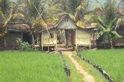 Hama Wereng Serang 9 Kecamatan di Probolinggo