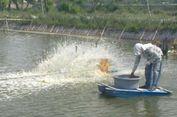 Produktivitas Rendah, KKP Fokus Revitalisasi Tambak Tradisional