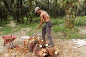 Perkebunan Sawit Penyumbang Terbesar Deforestasi di Kalimantan Timur