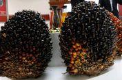 Di 2016, Penjualan Bakrie Sumatera Plantations Rp 1,57 Triliun