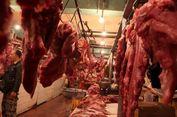 Bulog Segera Datangkan 5.000 Ton Daging Kerbau dari India