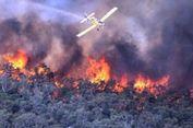 Malunya Kepala BNPB Lihat Indonesia Dihujat Karena Kebakaran Hutan