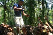 Boikot Uni Eropa Jadi Momentum Perbaikan Industri Sawit di Tanah Air