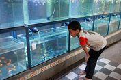 Jangan Anggap Remeh, Ikan Juga Bisa Mengalami Depresi Seperti Manusia