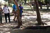 Jangan Takut Bertemu Komodo, Ini Tips Aman Berkunjung ke TN Komodo