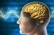 Terungkap, Alasan Manusia Berevolusi untuk Punya Otak yang Besar