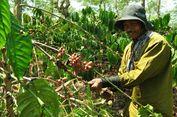 Kementan: Secara Kualitas, Kopi Indonesia Lebih Baik dari Vietnam