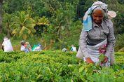 Liburan ke Sri Lanka? Ini Tips Mudah Mengurus Visa Sri Lanka