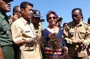 'Lawi-lawi', Harapan Baru Ekspor Rumput Laut Indonesia