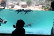 Baobab dan Jakarta Aquarium, Terbaru dari Taman Safari Indonesia
