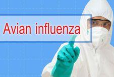 Wabah Flu Burung Pertama, Filipina Akan Musnahkan 400.000 Unggas