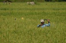 Sindiran Jokowi buat IPB dan Paradoks Pertanian Indonesia