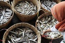 FAO: Harga Ikan Dunia Cenderung Naik