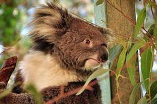 Jelajah Alam Liar Australia Barat, Padang Pasir, dan Beri Makan Wombat