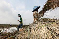 Pangan, Salah Satu Tantangan Pembangunan Berkelanjutan