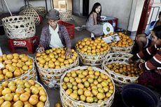 Impor Jeruk dari China Melonjak