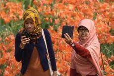 Kebun Bunga Amaryllis Kembali Mekar, Tolong Jangan Dirusak...