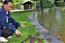 Ribuan Kodok Milik Jokowi Mati Diterkam Biawak