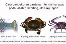 Tim Gabungan Polri Gagalkan Penyelundupan Benih Lobster Rp 13 Miliar