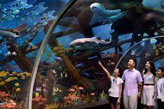 Begini Cara Asyik dan Seru untuk Ajari Anak Cintai Ekosistem Laut