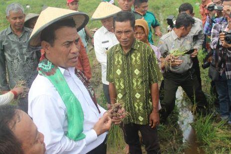 Ada yang Mencari Tahu Keberhasilan Swasembada Pangan Indonesia