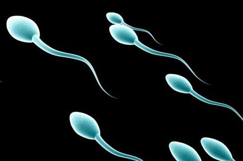 Jumlah Sperma Pria Modern Makin Sedikit