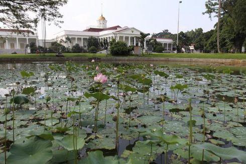 Di Bogor, Raja dan Ratu Swedia Akan Disambut 200 Pelajar dan 21 Dentuman Meriam
