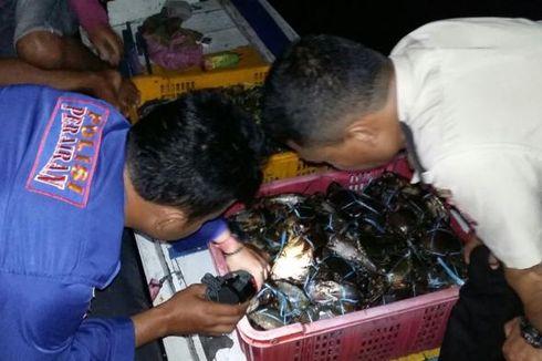 Tangkap Ratusan Kepiting Bertelur untuk Dijual ke Luar Negeri, 3 Orang Jadi Tersangka