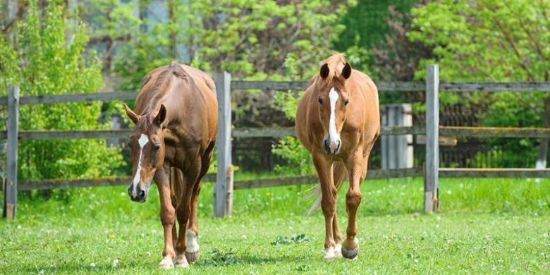 Ilustrasi kuda.